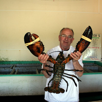 Some of the LARGEST Lobsters in the World Caught Right Here in Nova Scotia!